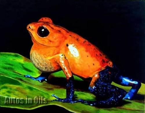 Poison_dart_frog_wmark